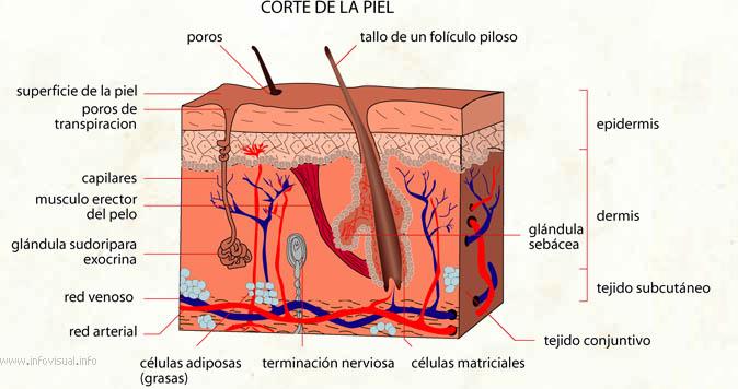Arrugas profundas